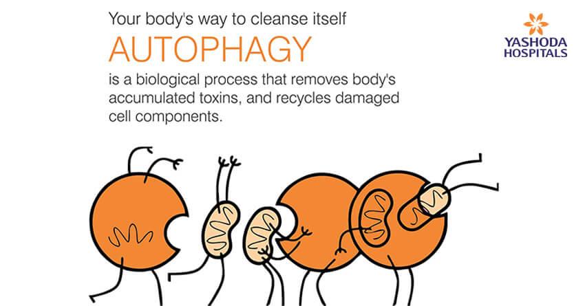 Autophagy biological process