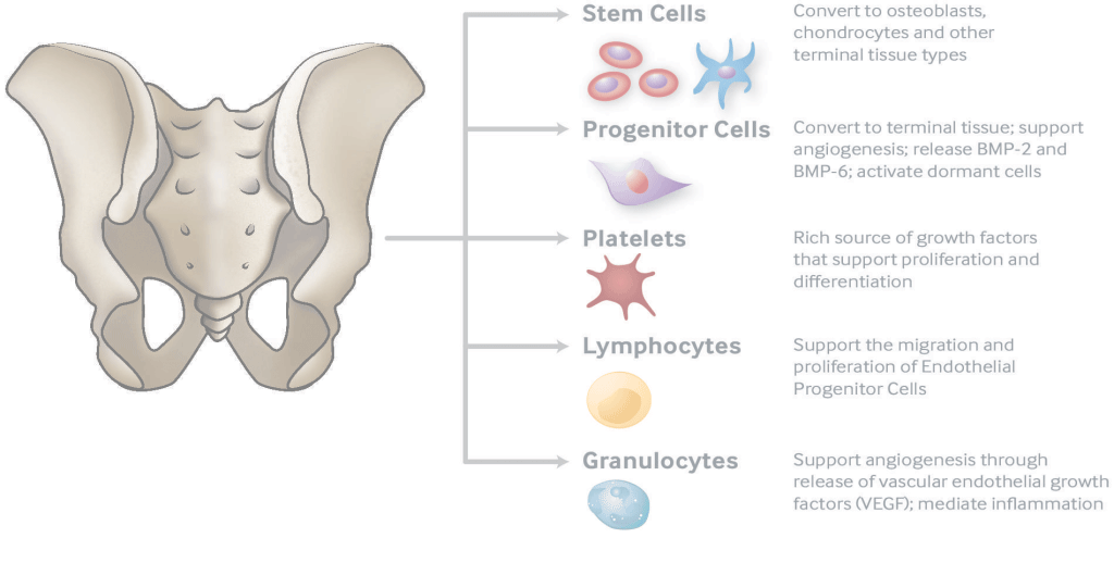Regenerative Therapy of Bone & Joint Diseases