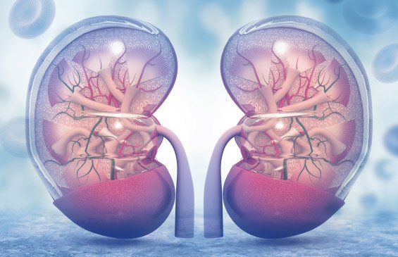 Renal Angioplasty Cost in India | Renal Angioplasty Cost in Hyderabad