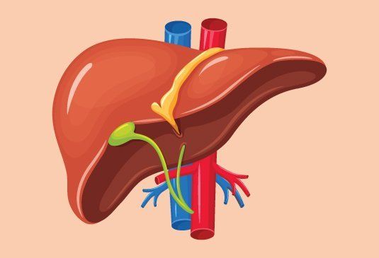 liver transplant surgery cost