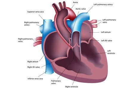 Heart surgery types risks benefits recovery and cost what are the different types of heart surgery ccuart Choice Image